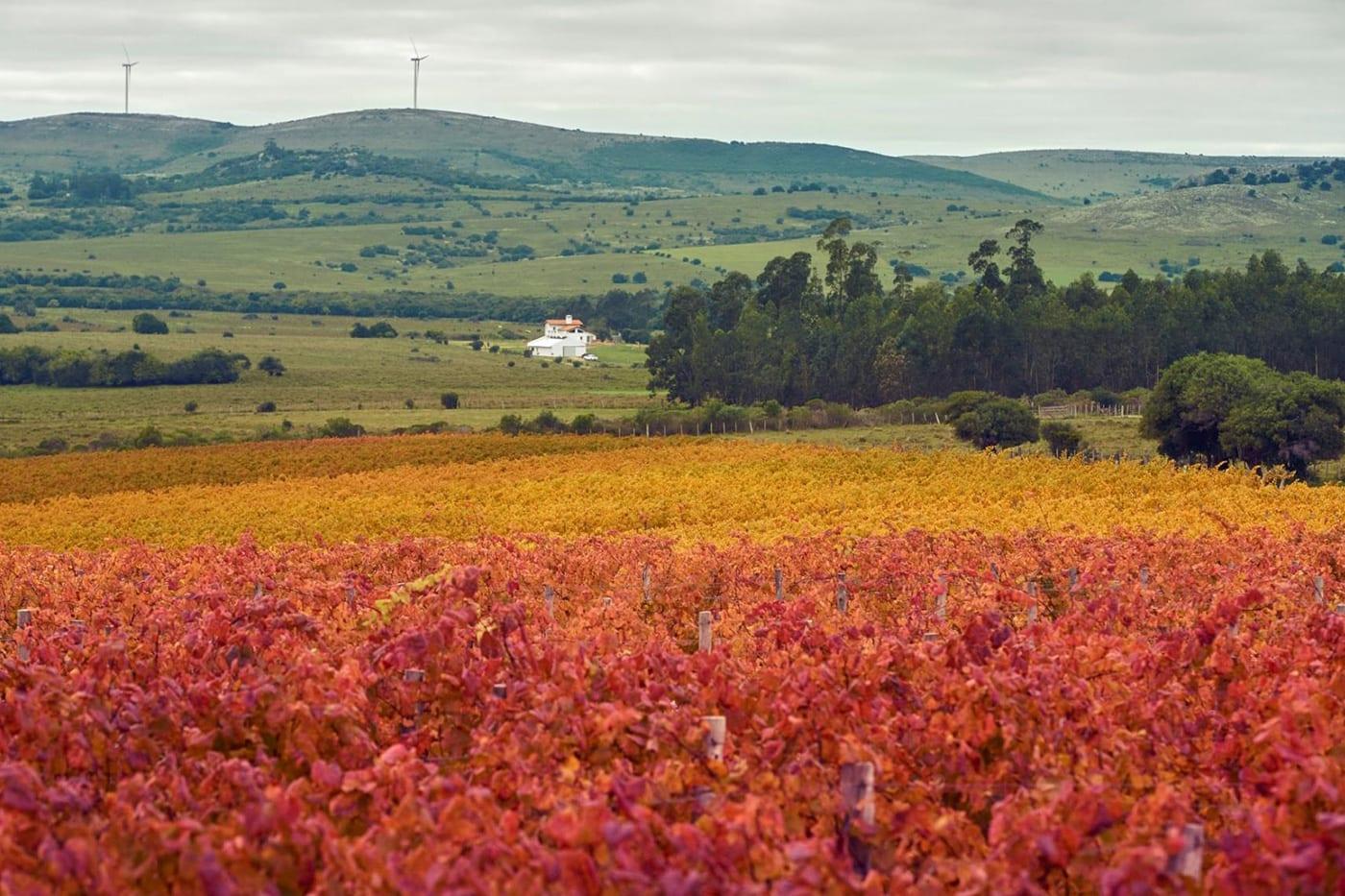 Viña Edén - Paseos Uruguay